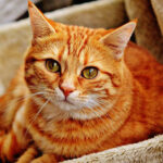 Domestic Animal Insurance: Points to Consider