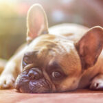 Dog Insurance: 16,000 reasons to hire them